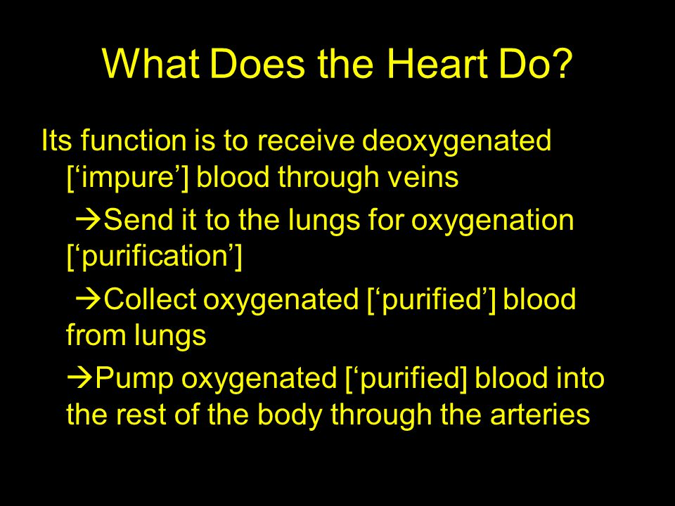 What Does the Heart Do Its function is to receive deoxygenated ['impure'] blood through veins.